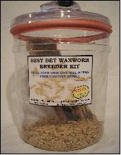 WAX WORM BREEDER KIT
