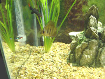 Fresh Water, Salt Water And Game Fish Eat Wax Worms & Mealworms